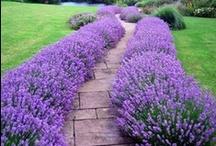 Garden Decor / Plants, color, arrangement, DIY's, Pots,