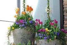 Garden in a Pot / Container gardening / by Yey Guzman
