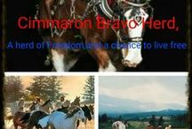 HORSE   RP ( Cimarron BRAVO HERD )   This is my board 8971fab15a