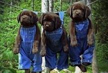 CUTE, TINY PUPPIES!!