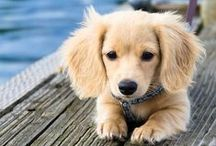 Dog Breeds / Pure, mixed, you name it