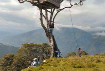 T Tree-House & hammock