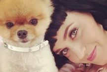 Celebrity Pets / Celebs bonding with their pets
