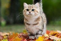 Feline Fun / Cats. Kittens. Meow!