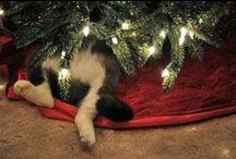 ❄️ ❅ ❄︎ ✭ Noël ✭ ❄︎ ❅ ❄️