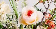 b l u m e n / Alles rund um schöne Pflanzen, Blumen & wie man sie hübsch anrichten kann.