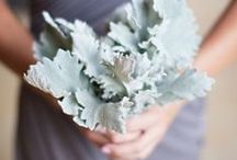Eucalyptus and Dusty Miller / Eucalyptus and dusty miller inspired wedding flowers. In love with the grey tones, especially in bridal bouquets.