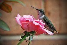 Różany ogród / Motywy róż