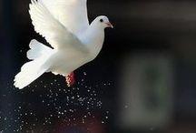 Birds and Animals