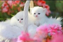 Cats.Kittens & Animals