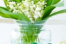 Lily of the valeys