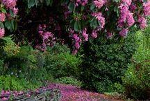 Wild flowers bright colers