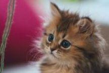 Kittens & Cats II