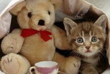 Kittens & Cats III