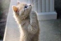 Kittens & Cats IV