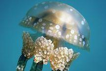 medusas / jellyfish  OMG