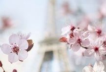 *FLOWERS & FLORALS