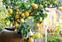 Gardening / by Veronica Cartagena