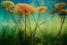 Fotos Vegetación Exótica