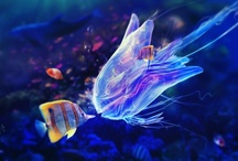 Fotos Animales Aquaticos Exóticos