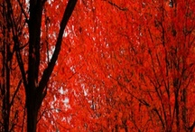 Very Red