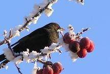 Winterkiekjes  / De donkere dagen van december lenen zich uitstekend voor sfeervolle foto's van de streek. De ideale tijd voor een winterkiekjes-wedstrijd. Ook dit jaar zien we ons prachtige land weer terug in alle ingezonden winterkiekjes. Wat is het land van Jan Linders toch mooi! Iedereen bedankt voor alle leuke, mooie en grappige inzendingen.