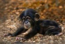 Cutie Animal's Baby