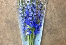 DIY {Blue Flowers} Wedding Flowers / Just a selection of blue flowers available from The Flowermonger. DIY  Wedding flowers | Blue wedding flowers | Blue wedding theme | DIY venue styling