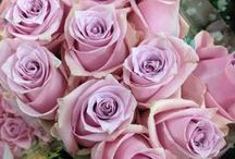 Flower Varieties {Lilac Flowers} / Just a selections of flowers available from The Flowermonger!