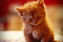 Animals / -Cute animals-