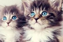 Cats <3 / Pictures of kittens and cats (: