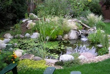 Water Gardens & Koi Ponds / Certainly its own lifestyle, water gardening is a must for adding beauty and serenity to your outdoor living space.  The sound of waterfalls and the sights of koi and turtles splash in water, added with the beauty of waterlilies, is a necessity for every home owner!