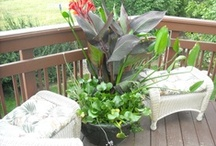 Container Water Gardens / Every one loves ponds, but some people may not have the room.  Small water gardens in containers have become very popular.