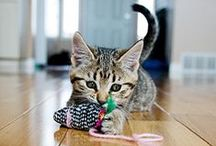 Purrfect Cat Toys / Your cunning cat loves to find things to keep him occupied while you're away, watching TV, making dinner .... pretty much all the time! Here are some suggestions of cat toys we think your cat would love.