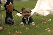 Doggy Dress Up / This board is reserved for only the most dapper dogs of the bunch!