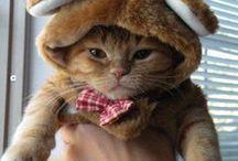 Kitty Closet