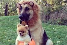 Halloweenies / The holiday may be over, but it's never too late to start planning your pet's costumer for next year!