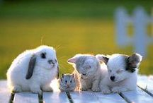 cuddly pets n cool farm animals / pics of pet animals n farm animals (any domestic animal)