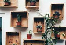 Cactus / Verde , Bonito e tem espinhos