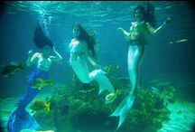 Real Mermaids / You can hire real mermaids for your events!