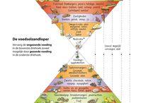 De voedselzandloper / Gezonde voeding om ouder te worden