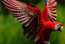 Aves <(º)~  <(º)~ / As aves constituem uma classe de animais vertebrados, bípedes, endotérmicos, ovíparos, caracterizados principalmente por possuírem penas, apêndices locomotores anteriores modificados em asas, bico córneo e ossos pneumáticos. / by .*♡*Andréia Sgorlon ♥ ❥♥
