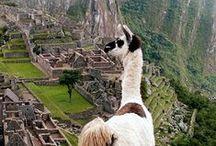 Peruuu / Perfect Peru things.