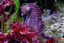 Csikóhalak