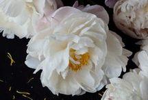 Fiori Rosa fiori di pesco...