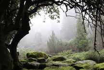 Landscapes / Nature / ☀ ѧѦ ѧ ︵͡︵ ̢ ̱ ̧̱ι̵̱̊ι̶̨̱ ̶̱ ︵ Ѧѧ ︵͡ ︵ ѧ Ѧ ̵̗̊o̵̖ ︵ ѦѦ ѧ  / by チℓ ᵕ_ᵕ) w