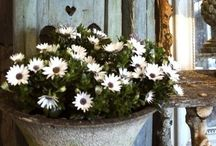 Favourite things.. / Daisies, hearts & stars  ❤