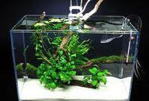 Aquarium - Aquascaping