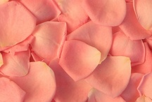 Rose Petals / by WholeBlossoms Wholesale Wedding Flowers