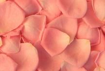 Rose Petals / by WholeBlossoms Wholesale Wedding Flowers